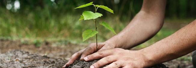 Plantation : la réglementation
